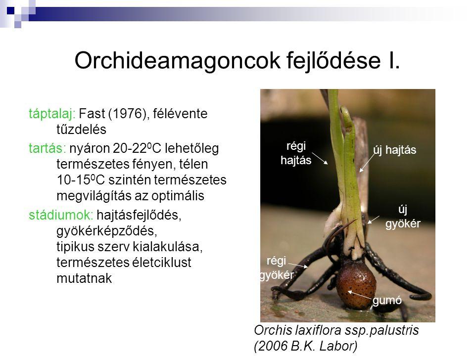 Orchideamagoncok fejlődése I. táptalaj: Fast (1976), félévente tűzdelés tartás: nyáron 20-22 0 C lehetőleg természetes fényen, télen 10-15 0 C szintén