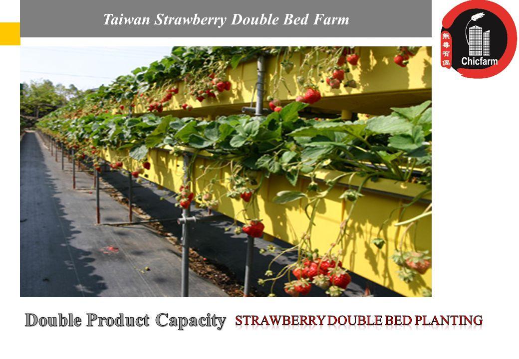 Az Audi Hungaria elvárásai és részvétele a magyar regionális repülőterek fejlesztésében Taiwan Strawberry Double Bed Farm