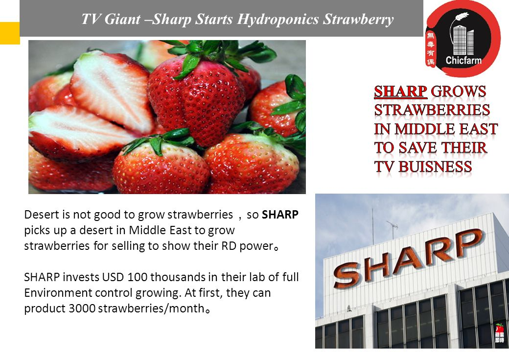 Az Audi Hungaria elvárásai és részvétele a magyar regionális repülőterek fejlesztésében Desert is not good to grow strawberries , so SHARP picks up a desert in Middle East to grow strawberries for selling to show their RD power 。 SHARP invests USD 100 thousands in their lab of full Environment control growing.