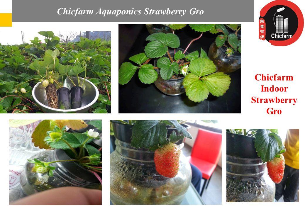 Az Audi Hungaria elvárásai és részvétele a magyar regionális repülőterek fejlesztésében Chicfarm Indoor Strawberry Gro Chicfarm Aquaponics Strawberry Gro
