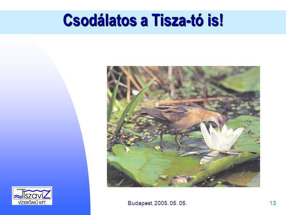 13 Csodálatos a Tisza-tó is! Budapest, 2005. 05. 05.