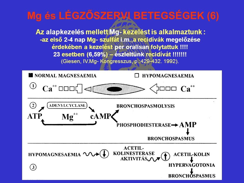 Mg és LÉGZŐSZERVI BETEGSÉGEK (6) Az alapkezelés mellett Mg- kezelést is alkalmaztunk : -az első 2-4 nap Mg- szulfát i.m.,a recidívák megelőzése érdekében a kezelést per oralisan folytattuk !!!.