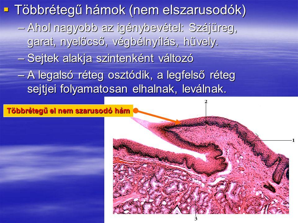  Többrétegű hámok (nem elszarusodók) –Ahol nagyobb az igénybevétel: Szájüreg, garat, nyelőcső, végbélnyílás, hüvely. –Sejtek alakja szintenként válto