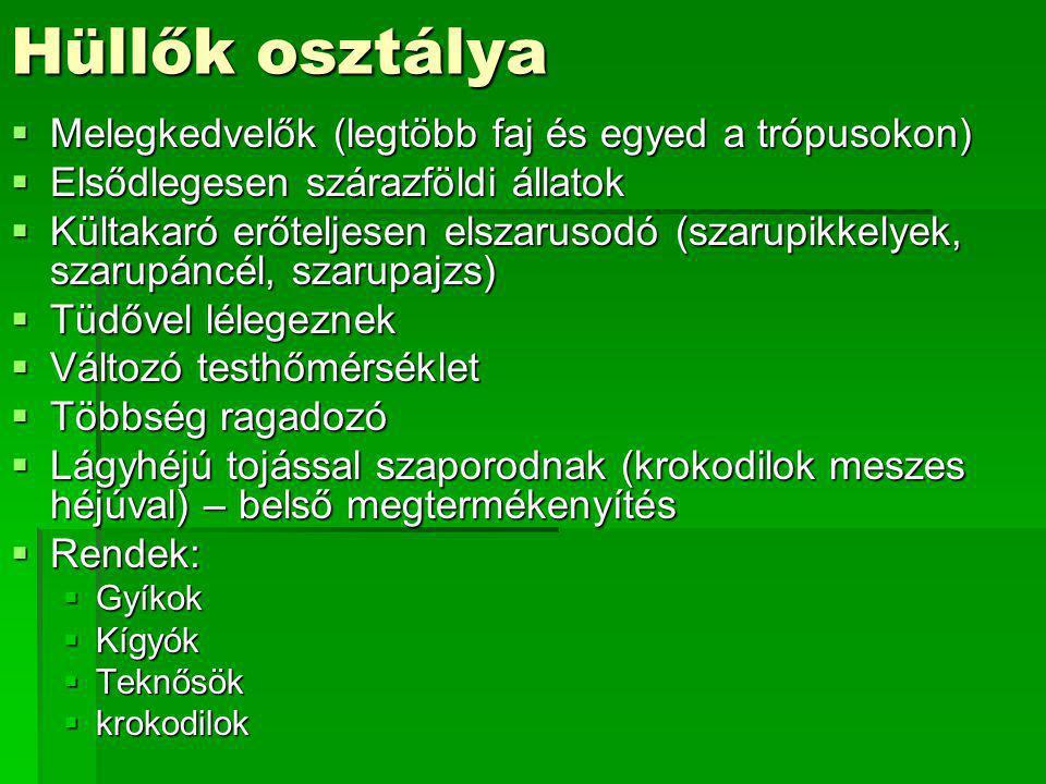 Hüllők osztálya  Melegkedvelők (legtöbb faj és egyed a trópusokon)  Elsődlegesen szárazföldi állatok  Kültakaró erőteljesen elszarusodó (szarupikke