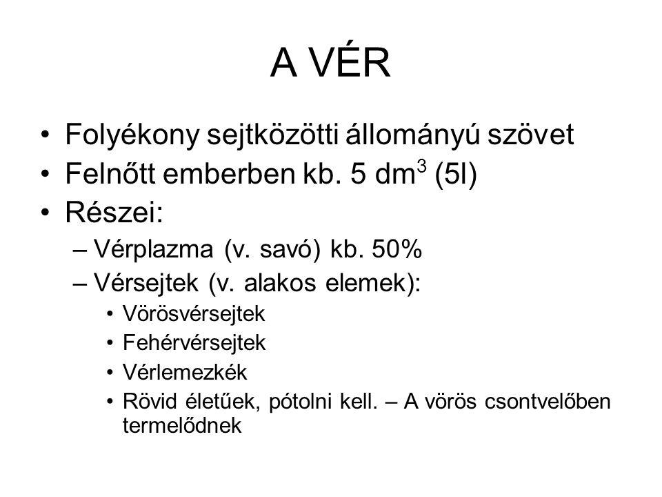 A VÉR Folyékony sejtközötti állományú szövet Felnőtt emberben kb. 5 dm 3 (5l) Részei: –Vérplazma (v. savó) kb. 50% –Vérsejtek (v. alakos elemek): Vörö