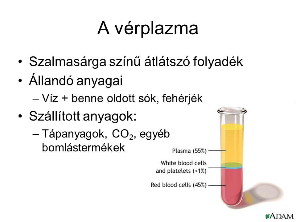 A vérplazma Szalmasárga színű átlátszó folyadék Állandó anyagai –Víz + benne oldott sók, fehérjék Szállított anyagok: –Tápanyagok, CO 2, egyéb bomlást