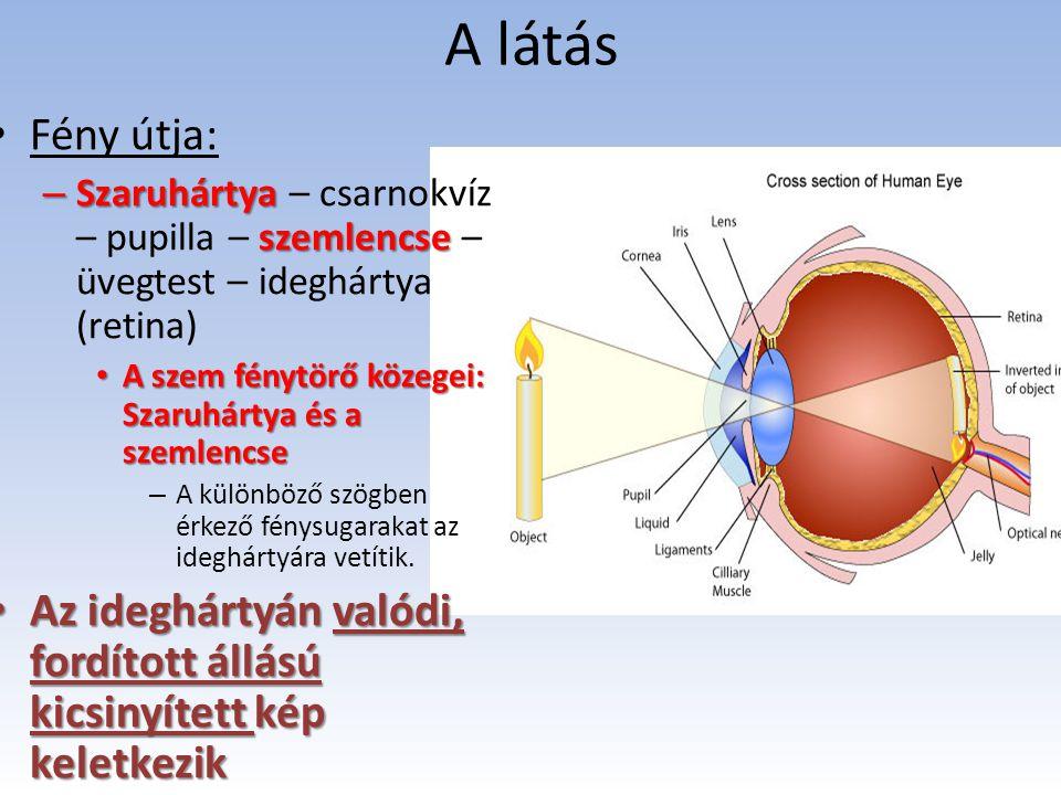 A közel- és távollátást a szemlencse alkalmazkodó képessége teszi lehetővé (domborúbb – laposabb) Látás érzete Látás érzete az agykérgi látóközpontban a tarkólebenyben keletkezik.