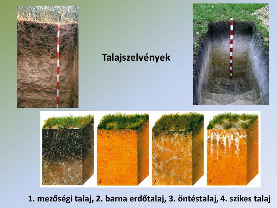 Talajszelvények 1. mezőségi talaj, 2. barna erdőtalaj, 3. öntéstalaj, 4. szikes talaj