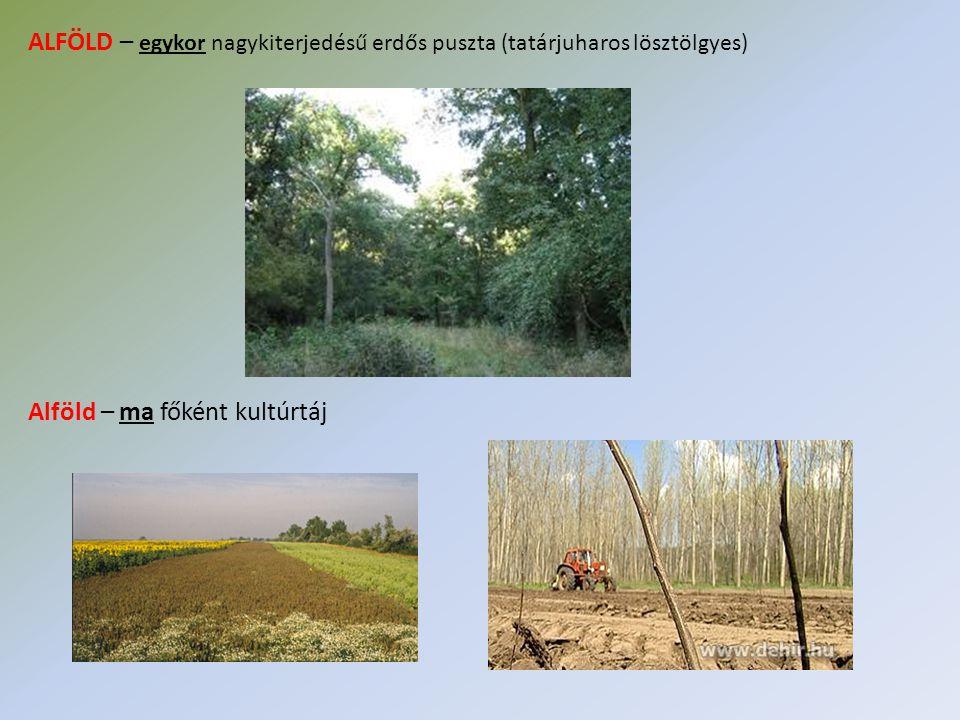 ALFÖLD – egykor nagykiterjedésű erdős puszta (tatárjuharos lösztölgyes) Alföld – ma főként kultúrtáj