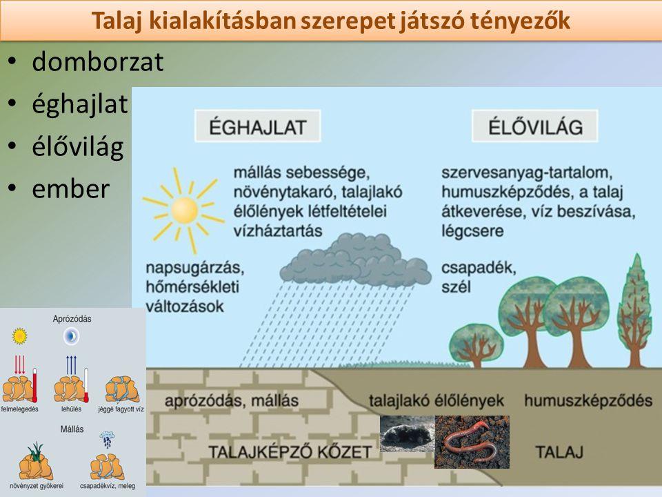 Talaj kialakításban szerepet játszó tényezők domborzat éghajlat élővilág ember