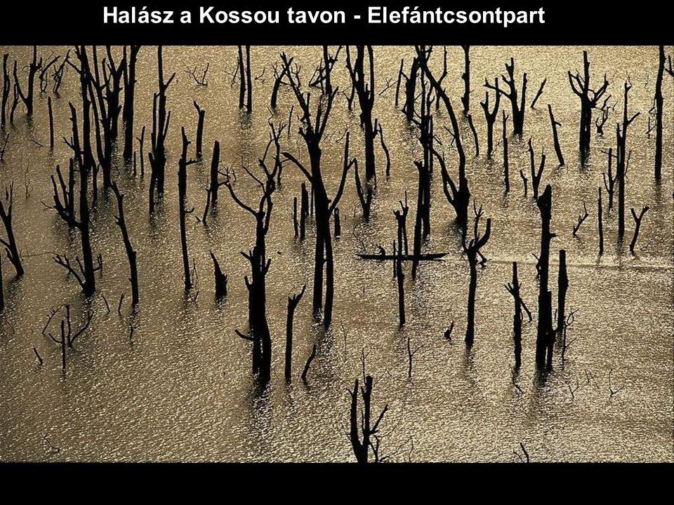 Halász a Kossou tavon - Elefántcsontpart