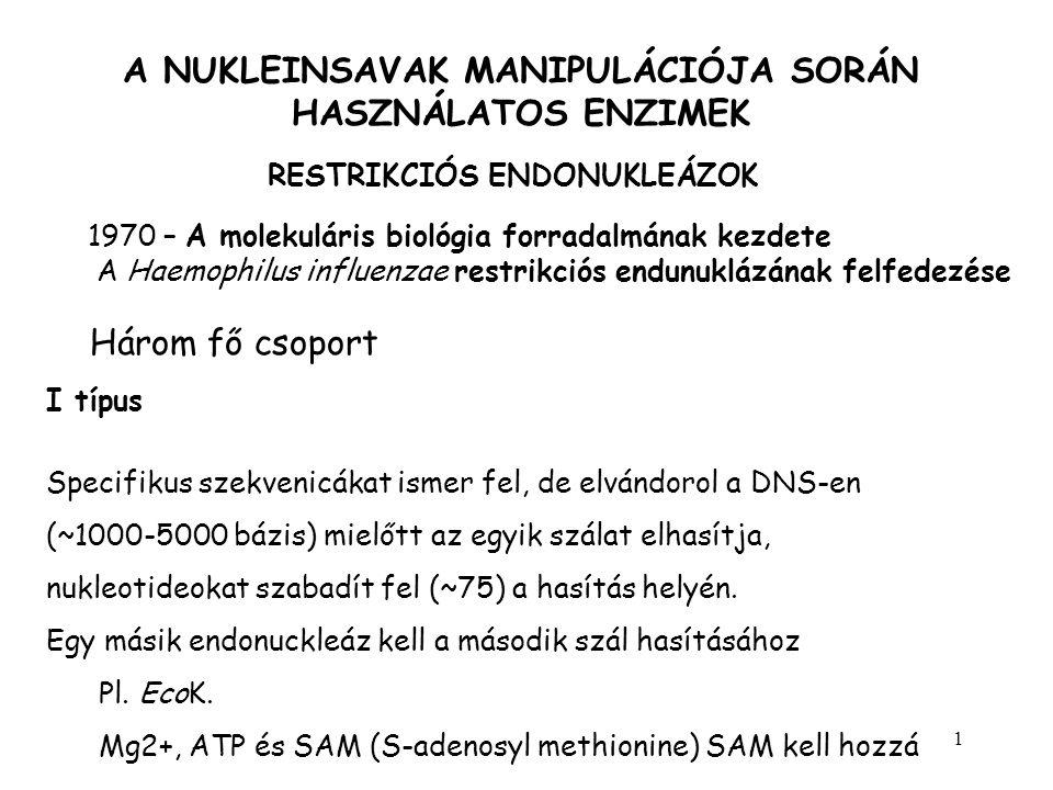 2 A NUKLEINSAVAK MANIPULÁCIÓJA SORÁN HASZNÁLATOS ENZIMEK RESTRIKCIÓS ENDONUKLEÁZOK II típus Speciális célszekvenciát ismer fel és hasítja a DNS-t mindkét szálon a felismerési szekvenciában vagy annak környezetében pl.