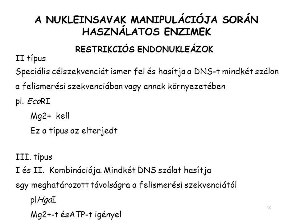 3 A NUKLEINSAVAK MANIPULÁCIÓJA SORÁN HASZNÁLATOS ENZIMEK RESTRIKCIÓS ENDONUKLEÁZOK EnzimFelismerőhely hossza Felismerő-hasítóhely Forrás organizmus AluI4 AG/CTArthrobacter luteus HphI5 GGTGAN 8 /Haemophilus parahaemolyticus EcoRI6 G/AATTCEscherichia coli BamHI6 G/GATCCBacillus amyloliquefaciens Ragadós végeket adó hasítások (sticky end) 5 túlnyúló SalI6Streptomyces albis 3 túlnyúló KpnI6Klebsiela pneumonia Tompa végű hasítások (blunt end) HaeIII4Haemophilus aegyptus 5 G TCGAC 3 3 CAGCT G 3 5 GGTAC C 3 3 C CATGG 5 5 GG CC 3 3 CC GG 5