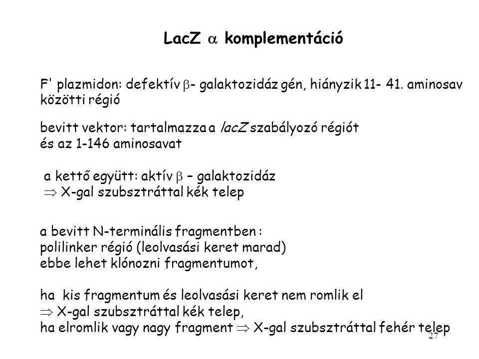 27 LacZ  komplementáció F' plazmidon: defektív  - galaktozidáz gén, hiányzik 11- 41. aminosav közötti régió bevitt vektor: tartalmazza a lacZ szabál