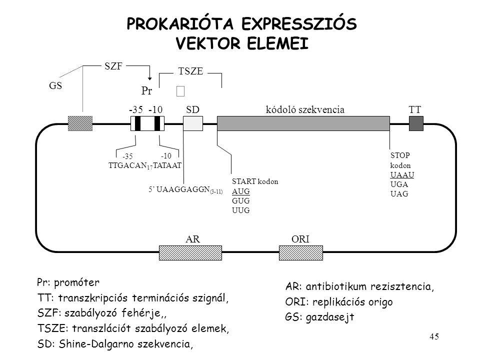 45 PROKARIÓTA EXPRESSZIÓS VEKTOR ELEMEI TT -35 -10 SZF -35 -10SDkódoló szekvencia Pr TSZE TTGACAN 17 TATAAT 5' UAAGGAGGN (3-11) START kodon AUG GUG UU