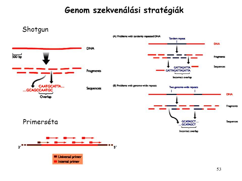 53 Genom szekvenálási stratégiák Shotgun Primerséta