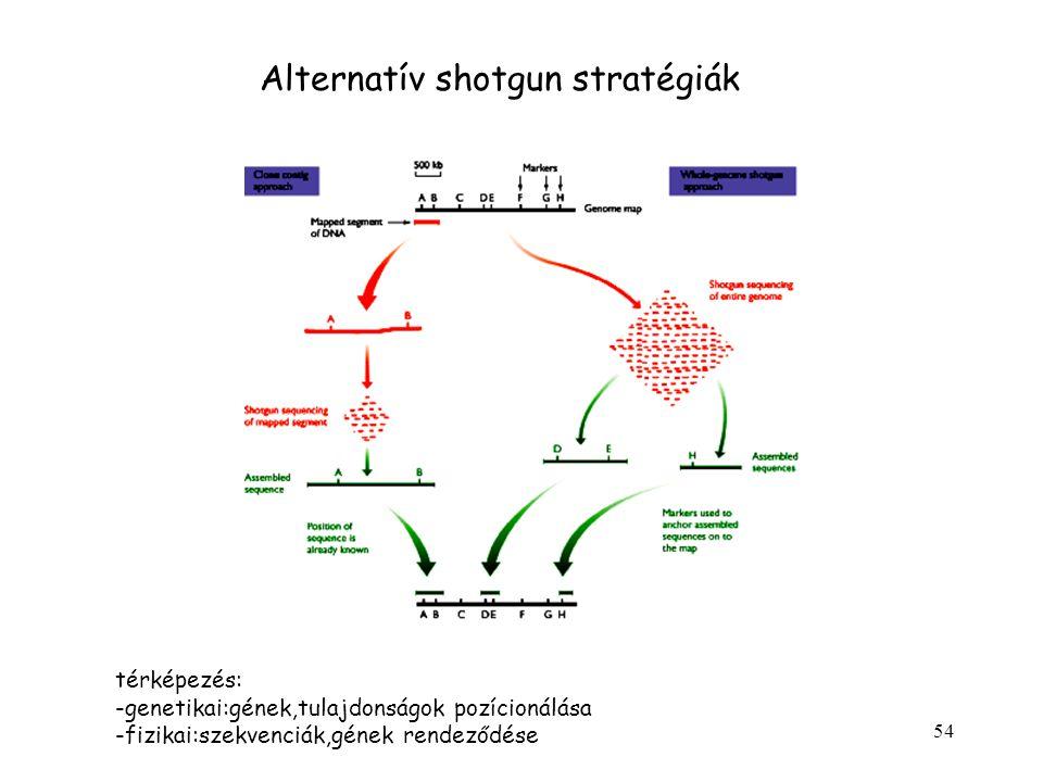 54 Alternatív shotgun stratégiák térképezés: -genetikai:gének,tulajdonságok pozícionálása -fizikai:szekvenciák,gének rendeződése