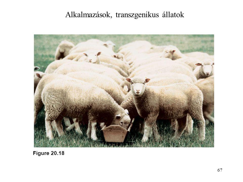 67 Alkalmazások, transzgenikus állatok Figure 20.18