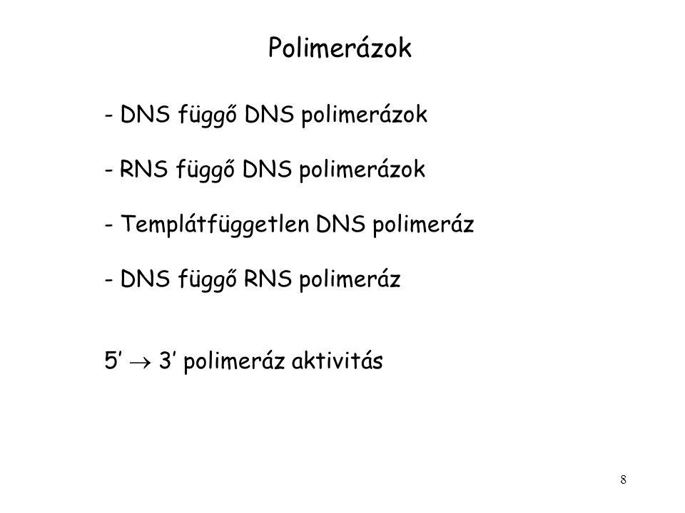 8 Polimerázok - DNS függő DNS polimerázok - RNS függő DNS polimerázok - Templátfüggetlen DNS polimeráz - DNS függő RNS polimeráz 5'  3' polimeráz akt