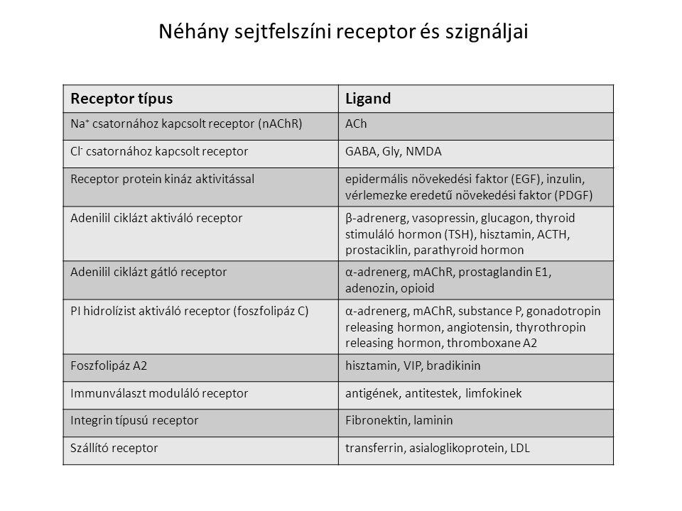 Néhány sejtfelszíni receptor és szignáljai Receptor típusLigand Na + csatornához kapcsolt receptor (nAChR)ACh Cl - csatornához kapcsolt receptorGABA,