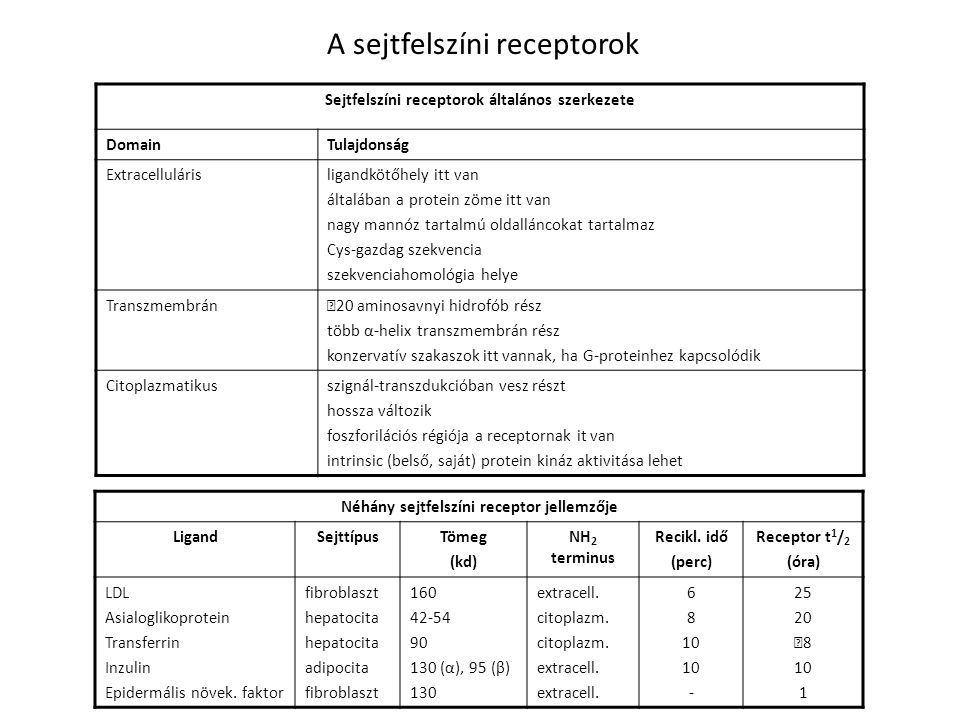 A sejtfelszíni receptorok Néhány sejtfelszíni receptor jellemzője LigandSejttípusTömeg (kd) NH 2 terminus Recikl. idő (perc) Receptor t 1 / 2 (óra) LD