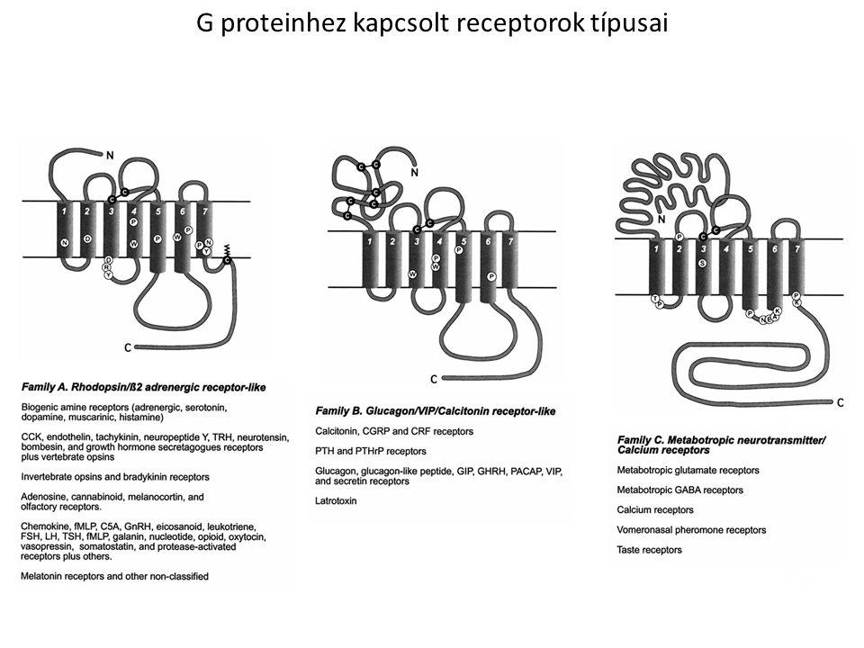 G proteinhez kapcsolt receptorok típusai