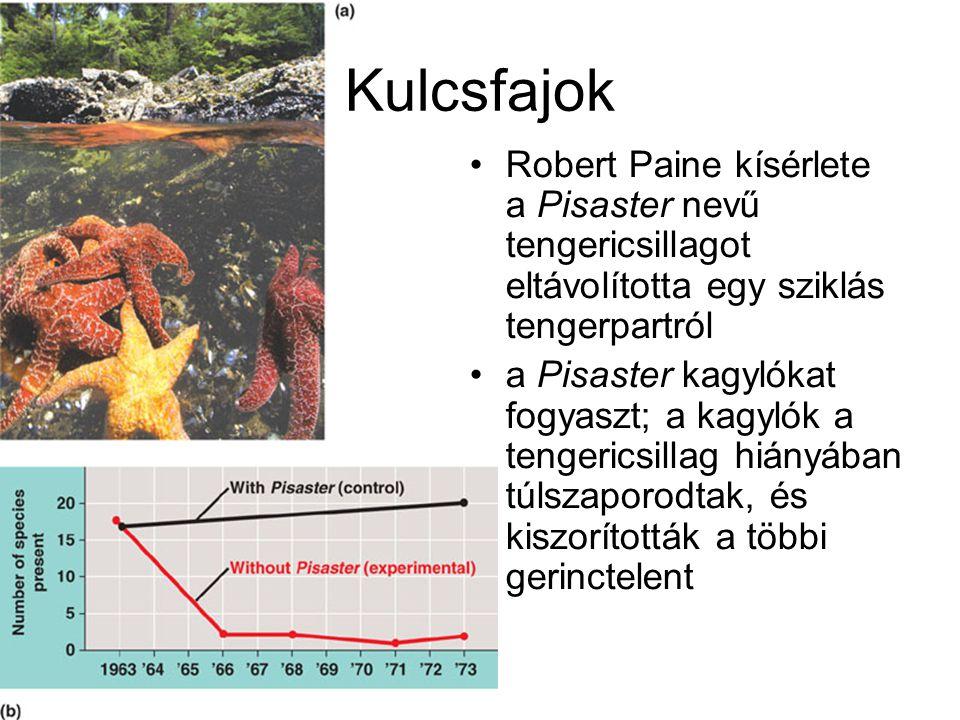 Kulcsfajok Robert Paine kísérlete a Pisaster nevű tengericsillagot eltávolította egy sziklás tengerpartról a Pisaster kagylókat fogyaszt; a kagylók a