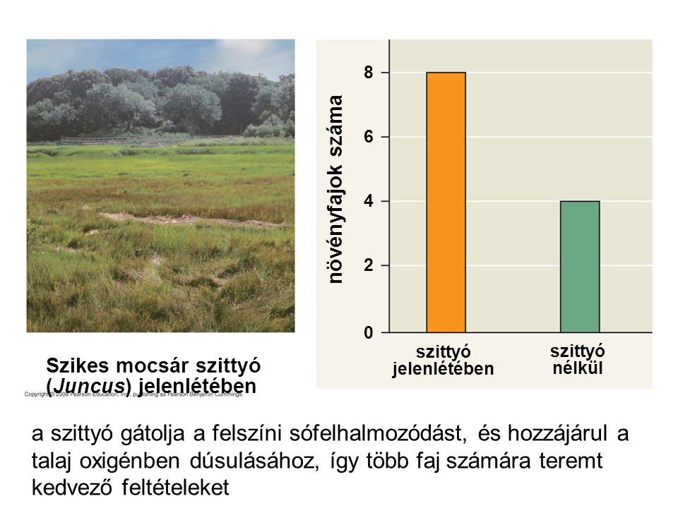 szittyó jelenlétében 0 2 4 6 8 növényfajok száma Szikes mocsár szittyó (Juncus) jelenlétében szittyó nélkül a szittyó gátolja a felszíni sófelhalmozód