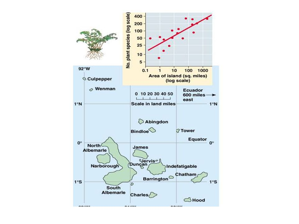 Egyenlítő-pólus gradiens Malayzia: 6 ha  711 fafaj Michigan: 2 ha  10-15 fafaj Alpok: 2 millió km 2  50 fafaj Brazília: 200 hangyafaj Iowa: 73 hangyafaj Alaszka: 7 hangyafaj
