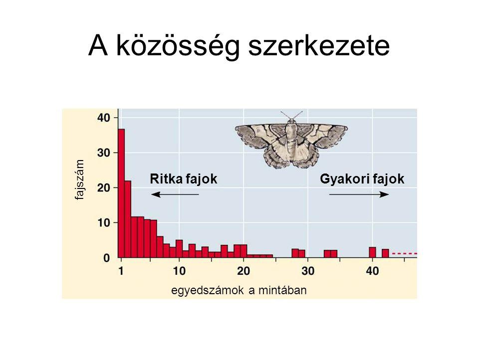 A közösség szerkezete egyedszámok a mintában fajszám Ritka fajok Gyakori fajok