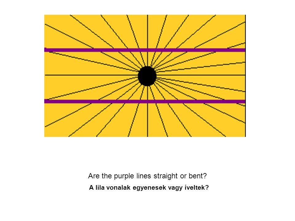 Are the purple lines straight or bent? A lila vonalak egyenesek vagy íveltek?