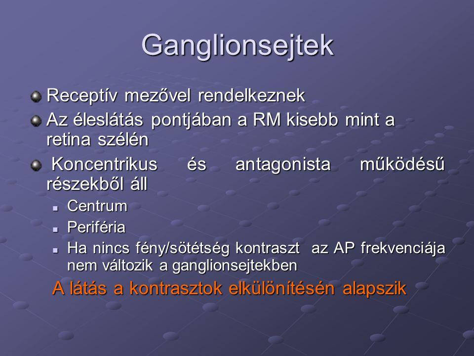Ganglionsejtek Receptív mezővel rendelkeznek Az éleslátás pontjában a RM kisebb mint a retina szélén Koncentrikus és antagonista működésű részekből áll Koncentrikus és antagonista működésű részekből áll Centrum Centrum Periféria Periféria Ha nincs fény/sötétség kontraszt az AP frekvenciája nem változik a ganglionsejtekben Ha nincs fény/sötétség kontraszt az AP frekvenciája nem változik a ganglionsejtekben A látás a kontrasztok elkülönítésén alapszik