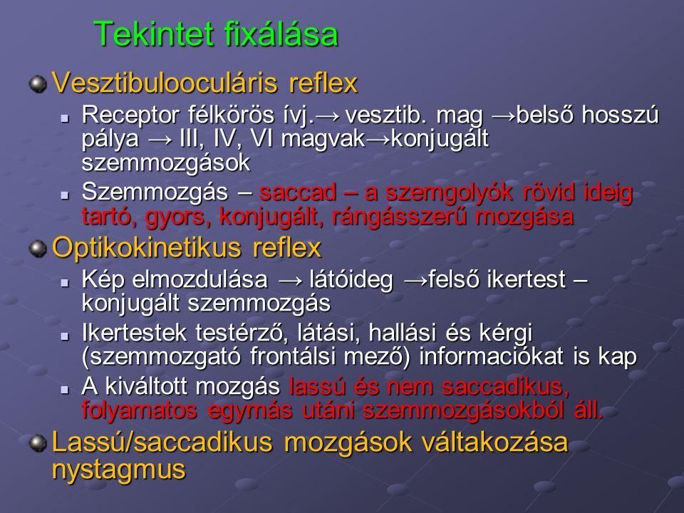 Tekintet fixálása Vesztibulooculáris reflex Receptor félkörös ívj.→ vesztib. mag →belső hosszú pálya → III, IV, VI magvak→konjugált szemmozgások Recep