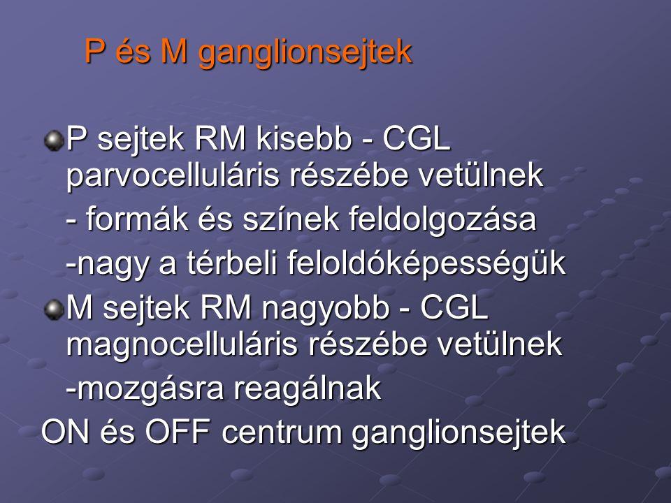 P és M ganglionsejtek P sejtek RM kisebb - CGL parvocelluláris részébe vetülnek - formák és színek feldolgozása -nagy a térbeli feloldóképességük M sejtek RM nagyobb - CGL magnocelluláris részébe vetülnek -mozgásra reagálnak ON és OFF centrum ganglionsejtek