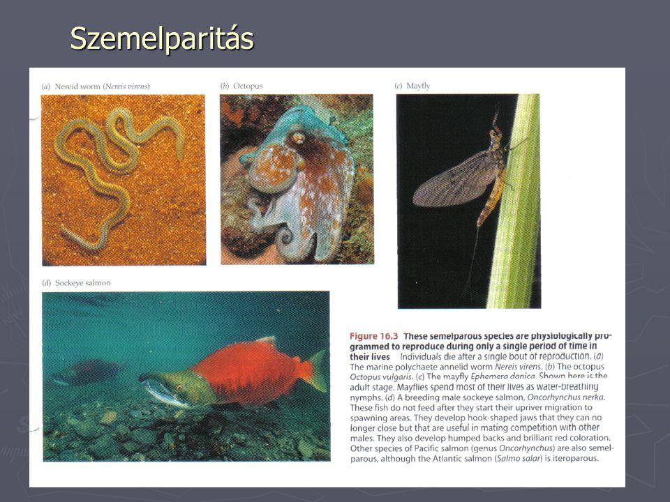 Petesejtek ► Oligolecitális – gerinchúros, emlős, ember ► Mezolecitális – kétéltűek ► Polilecitális  Telolecitális – halak, hüllők, madarak, kacsacsőrű  Centrolecitális - rákfélék