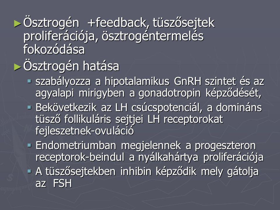 ► Ösztrogén +feedback, tüszősejtek proliferációja, ösztrogéntermelés fokozódása ► Ösztrogén hatása  szabályozza a hipotalamikus GnRH szintet és az ag