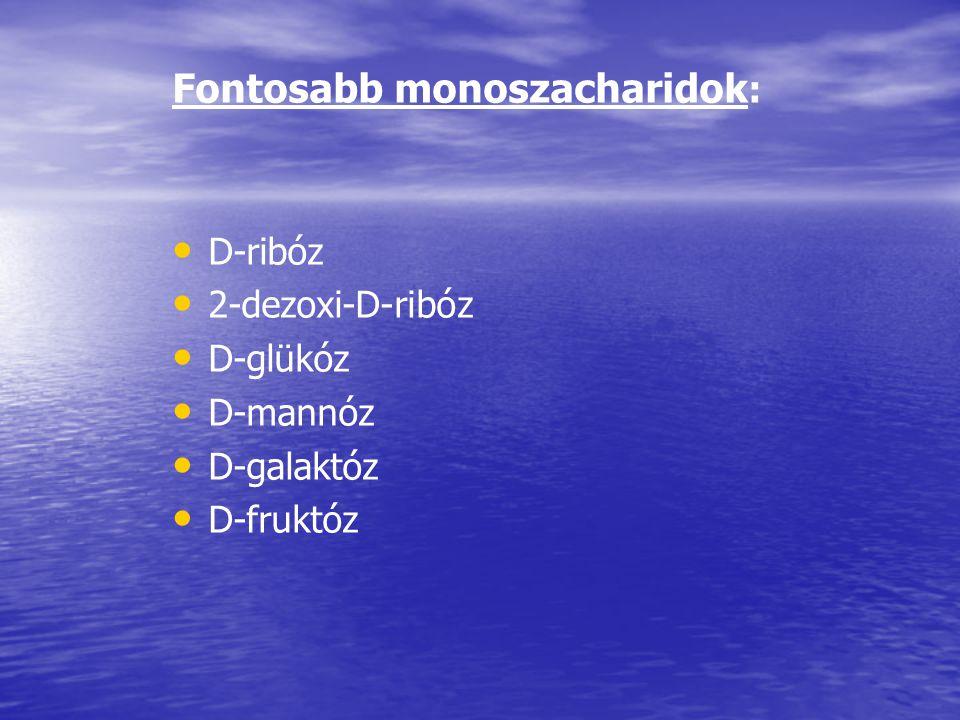 Fontosabb monoszacharidok : D-ribóz 2-dezoxi-D-ribóz D-glükóz D-mannóz D-galaktóz D-fruktóz
