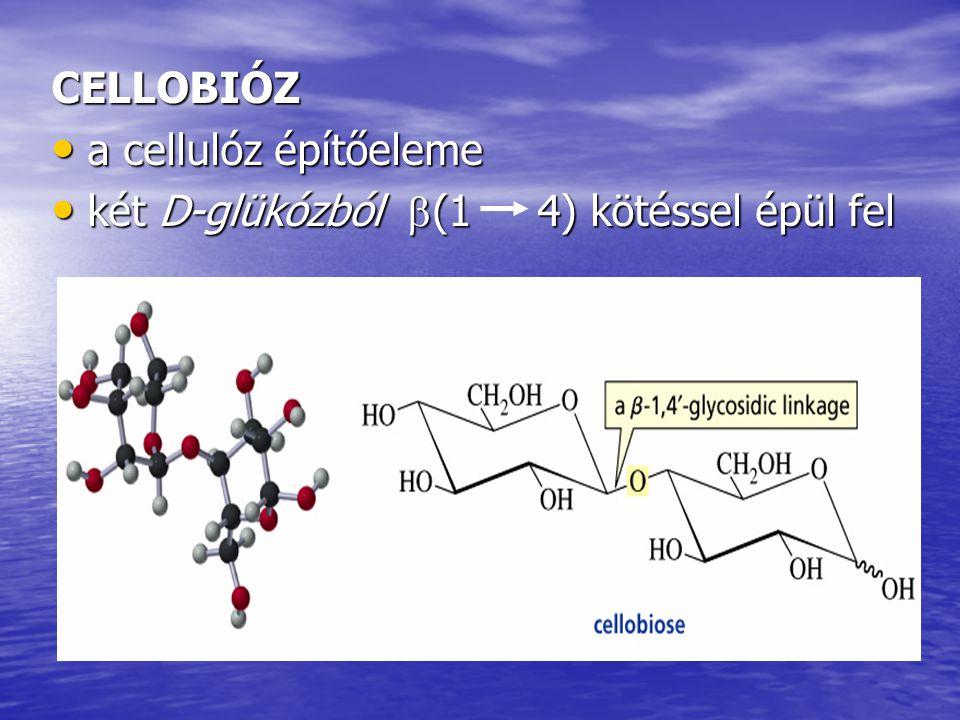 CELLOBIÓZ a cellulóz építőeleme a cellulóz építőeleme két D-glükózból  (1 4) kötéssel épül fel két D-glükózból  (1 4) kötéssel épül fel