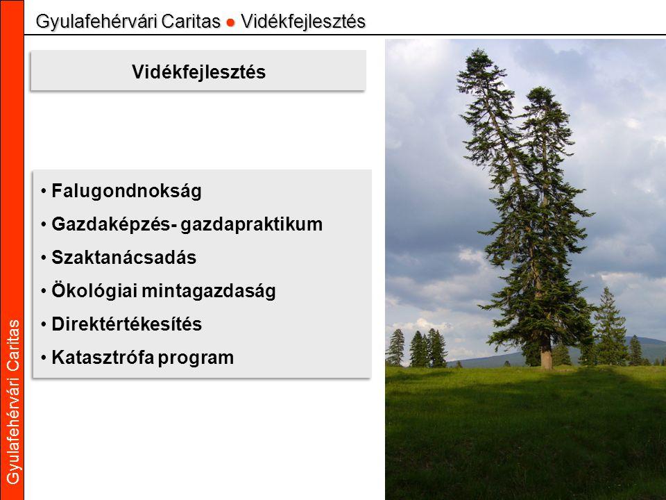 Gyulafehérvári Caritas Gyulafehérvári Caritas ● Vidékfejlesztés Vidékfejlesztés Falugondnokság Gazdaképzés- gazdapraktikum Szaktanácsadás Ökológiai mi