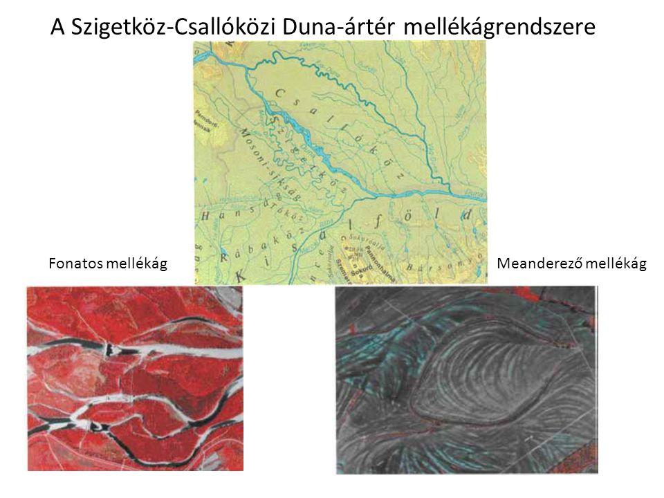 A Szigetköz-Csallóközi Duna-ártér mellékágrendszere Meanderező mellékágFonatos mellékág
