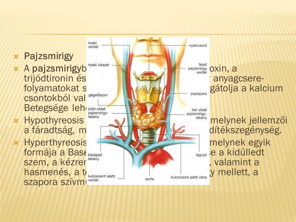  Pajzsmirigy  A pajzsmirigyben termelődő hormonok a tiroxin, a trijódtironin és a calcitonin. Az első kettő az anyagcsere- folyamatokat szabályozza,