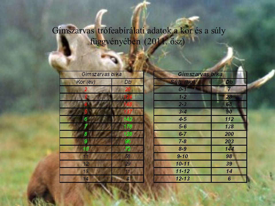 Gímszarvas trófeabírálati adatok a kor és a súly függvényében (2011. ősz)
