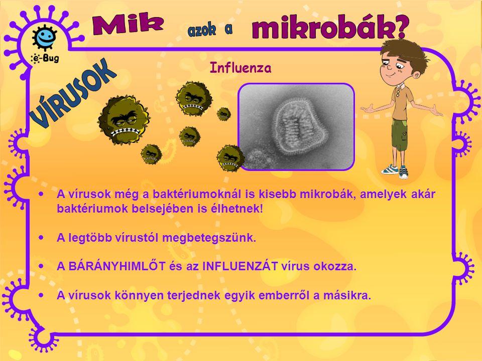 Influenza  A vírusok még a baktériumoknál is kisebb mikrobák, amelyek akár baktériumok belsejében is élhetnek!  A legtöbb vírustól megbetegszünk. 