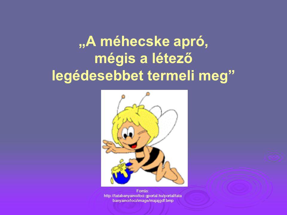 """""""A méhecske apró, mégis a létező legédesebbet termeli meg"""" Forrás: http://tatabanyainoifoci.gportal.hu/portal/tata banyainoifoci/image/majajgdf.bmp"""