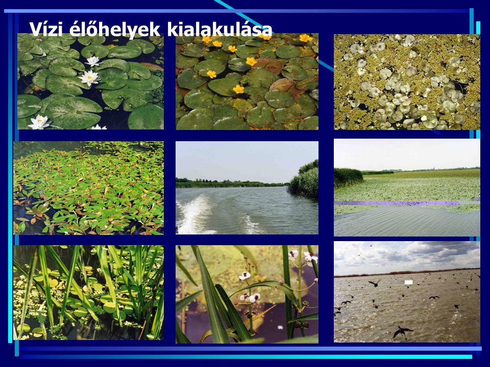Vízi élőhelyek kialakulása
