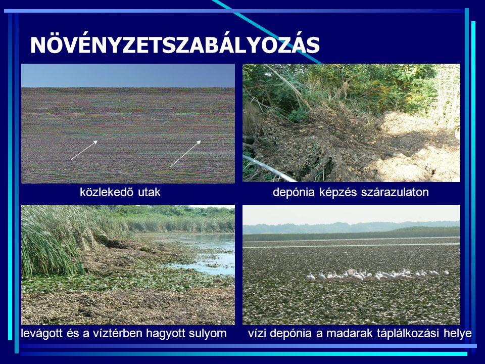 NÖVÉNYZETSZABÁLYOZÁS közlekedő utakdepónia képzés szárazulaton levágott és a víztérben hagyott sulyomvízi depónia a madarak táplálkozási helye