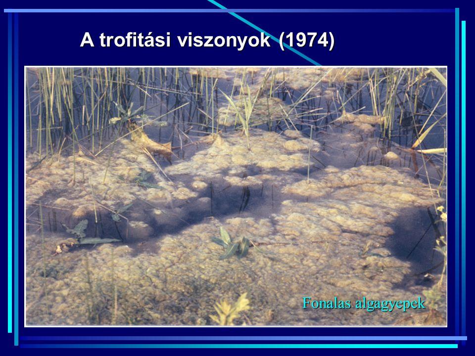 A trofitási viszonyok (1974) Fonalas algagyepek