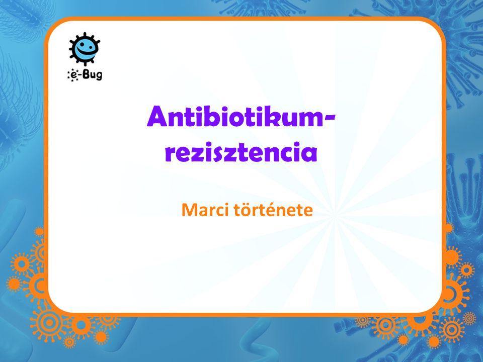 Antibiotikum- rezisztencia Marci története