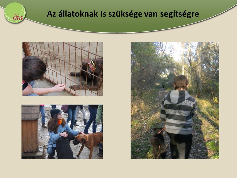 Az állatoknak is szüksége van segítségre