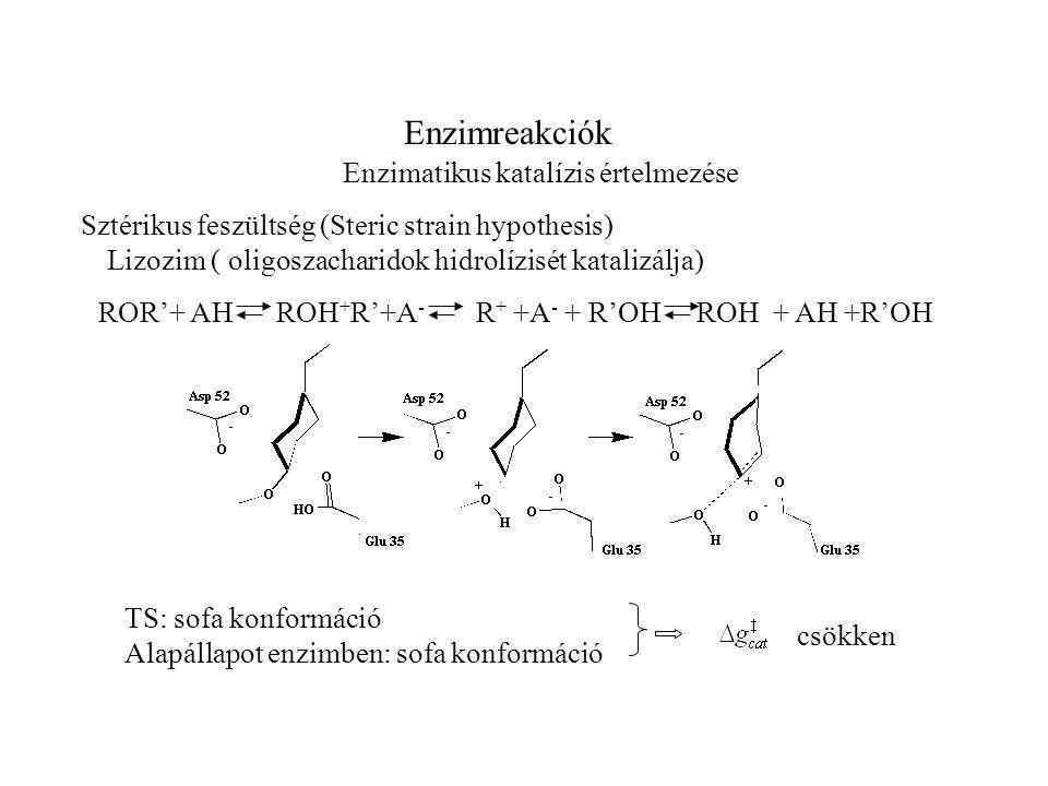 Enzimreakciók Enzimatikus katalízis értelmezése Sztérikus feszültség (Steric strain hypothesis) TS: sofa konformáció Alapállapot enzimben: sofa konformáció csökken Lizozim ( oligoszacharidok hidrolízisét katalizálja) ROR'+ AH ROH + R'+A - R + +A - + R'OH ROH + AH +R'OH